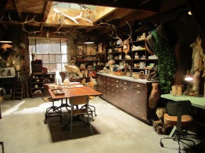 Taxidermy Studio