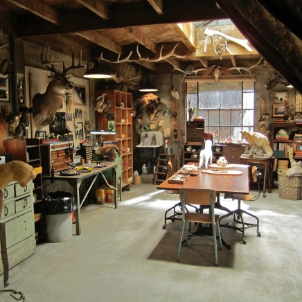 Taxidermy Studio